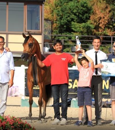SS Esenia Gold Champion, Puglia Arabian Horse Cup - C National Show